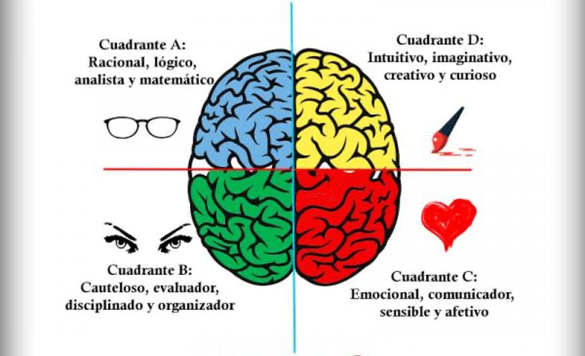 Hemisferios Cerebrales y Cuadrantes