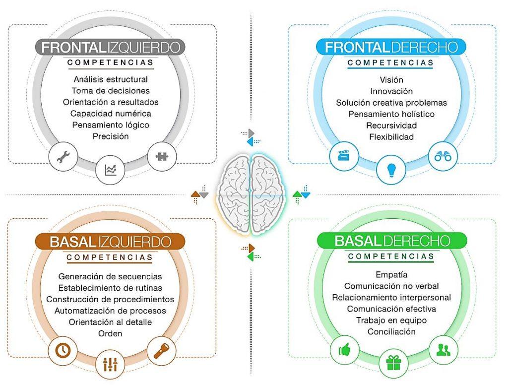 4 cuadrantes cerebrales en ventas y gestión.
